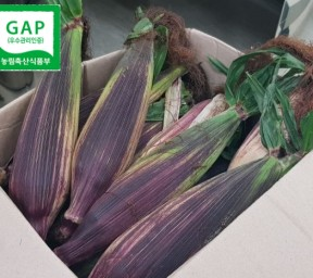 [Dr.KIM's] [GAP인증] 국내산 NON GMO 건조 자색옥수수 12개